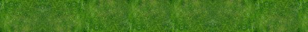 Grass 003.png