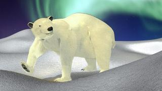 icebear_post_1.jpg