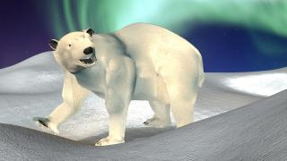 polar_24_noao.jpg