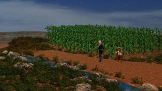 cornfield0.jpg