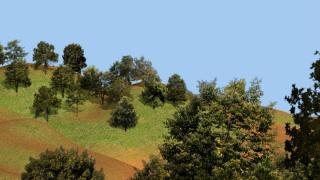 forest0.jpg
