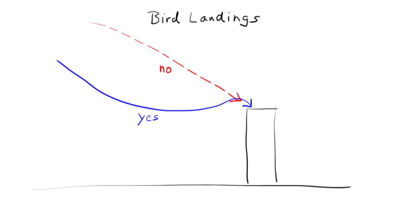 birdlandings.png