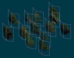 patch_trees.jpg