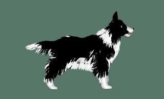 DogA02.jpg