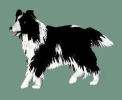 DogA04.jpg