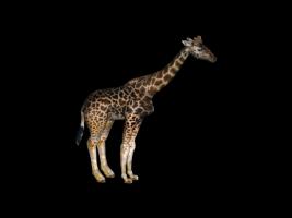 GiraffeFinal0.png