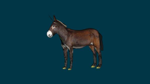 Donkey rendered99.jpg