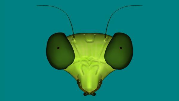 bug test front0.jpg