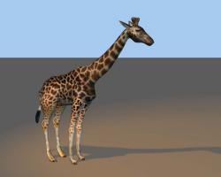Giraffe0.jpg