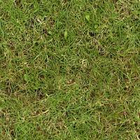 Grass_Weeds.jpg
